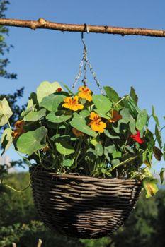 Les 4 saisons du jardin bio entretien marie arnould satoriz le bio pour tous - Les quatre saisons du jardinage ...