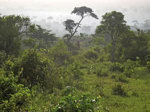 Paysages plateau de Danyi