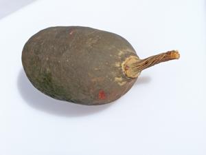 baobab9