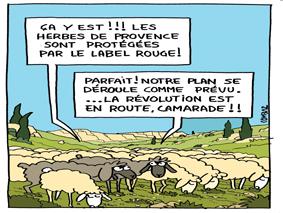 herbes de provence en français