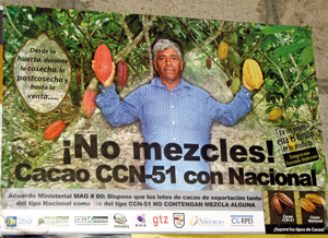 cacao3
