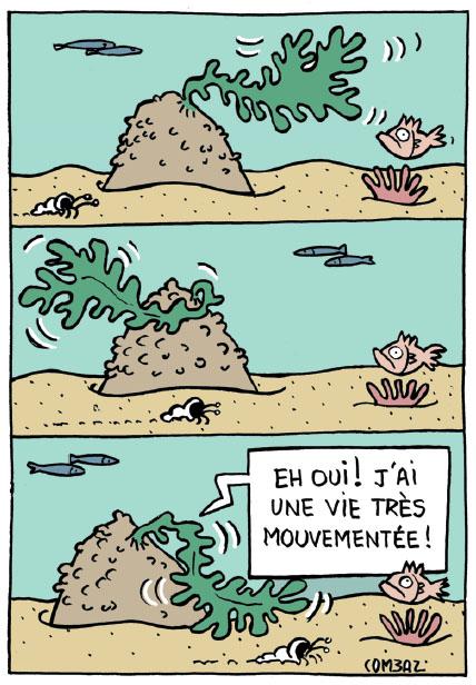 algues-dessin2