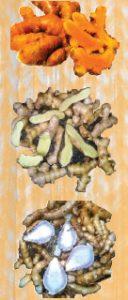 curcuma-varietes