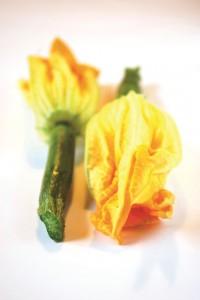 fleurcourgette