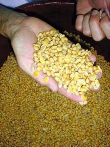 Danival-Grain-Soja