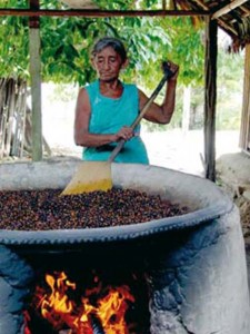 Le noyau du guarana est lentement séché pendant 6 jours.