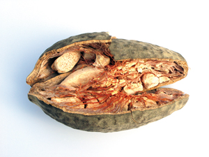 baobab10
