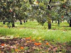Orangeraie-sol