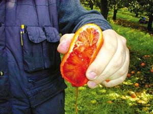 Oranges-Morro-jus