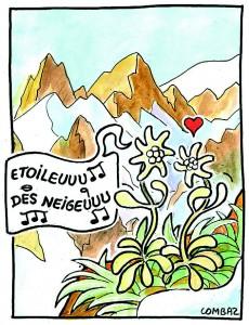 edelweiss4