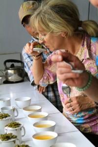 Tea-tasting dans le Darjeeling