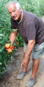 tomates8